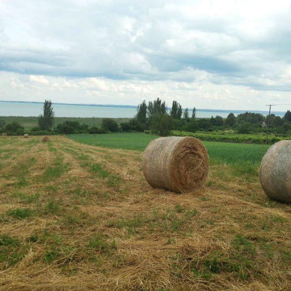 Ismét elszabadultak a négyzetméterárak a Balaton-parton